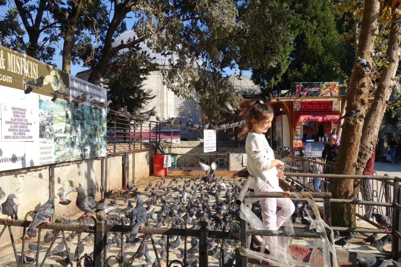 meisje met duiven in Eyüp