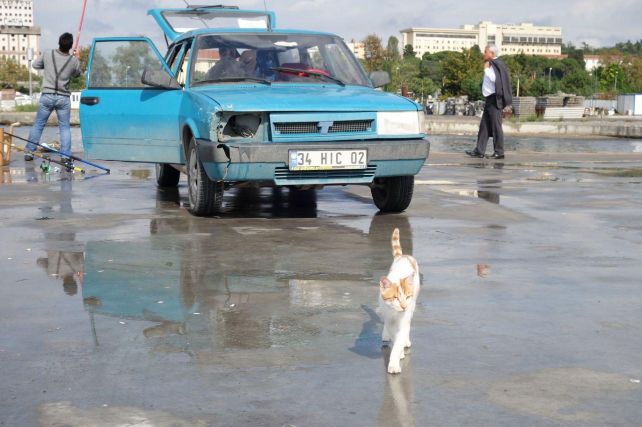 Autorijden in Turkije auto Istanbul met kat