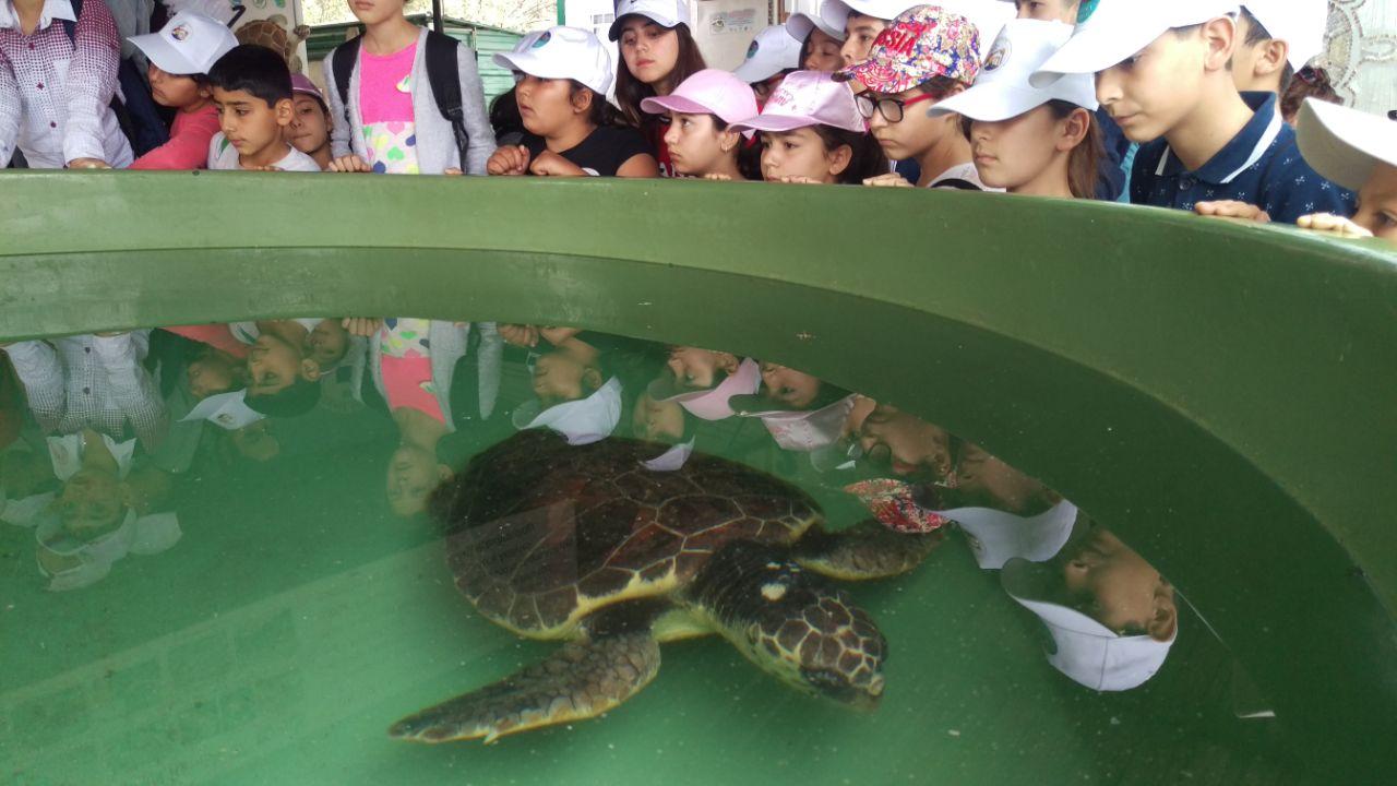 Dalyan schildpaddenopvang