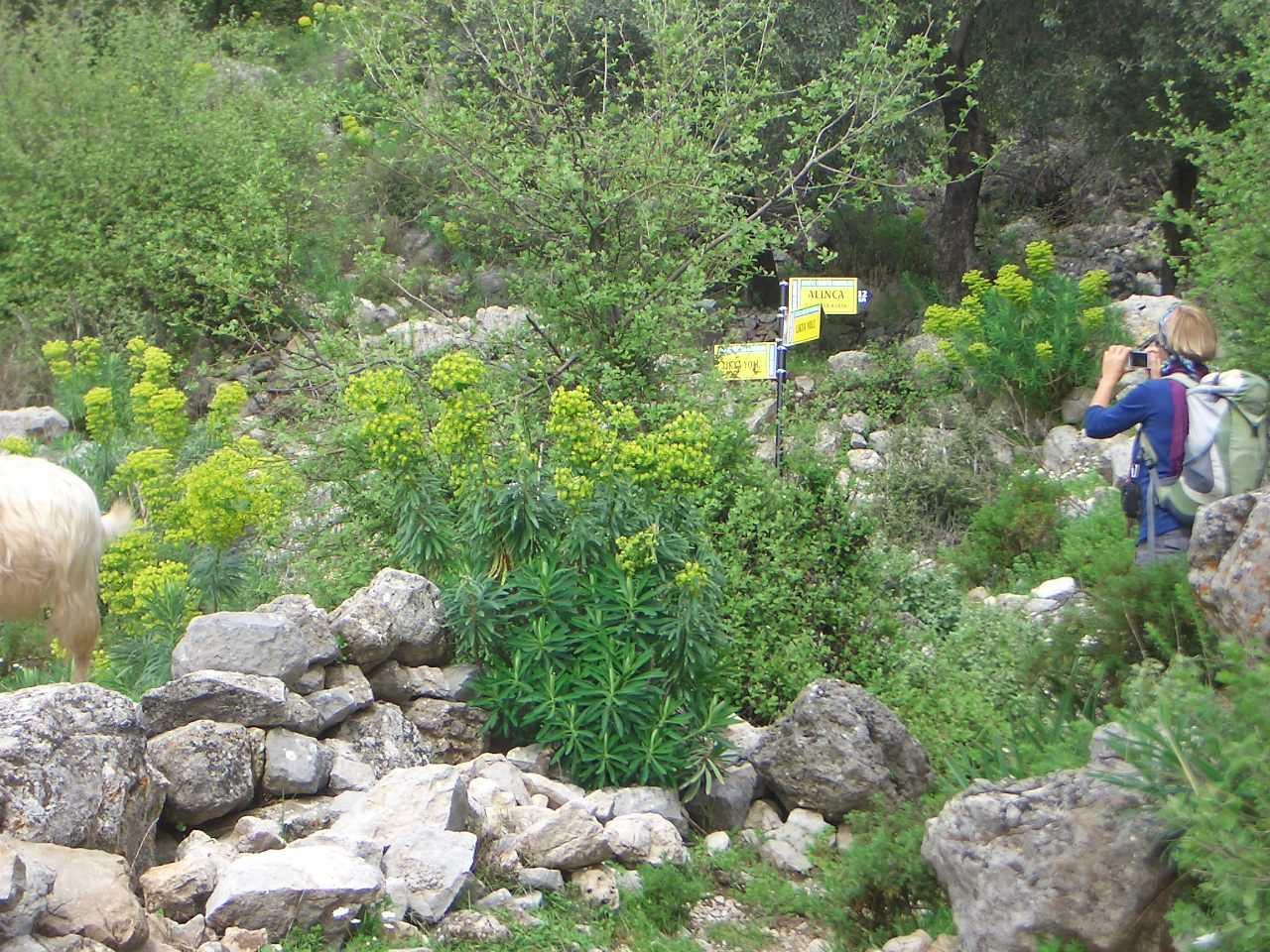 Lycian Way wegwijzer bloemen