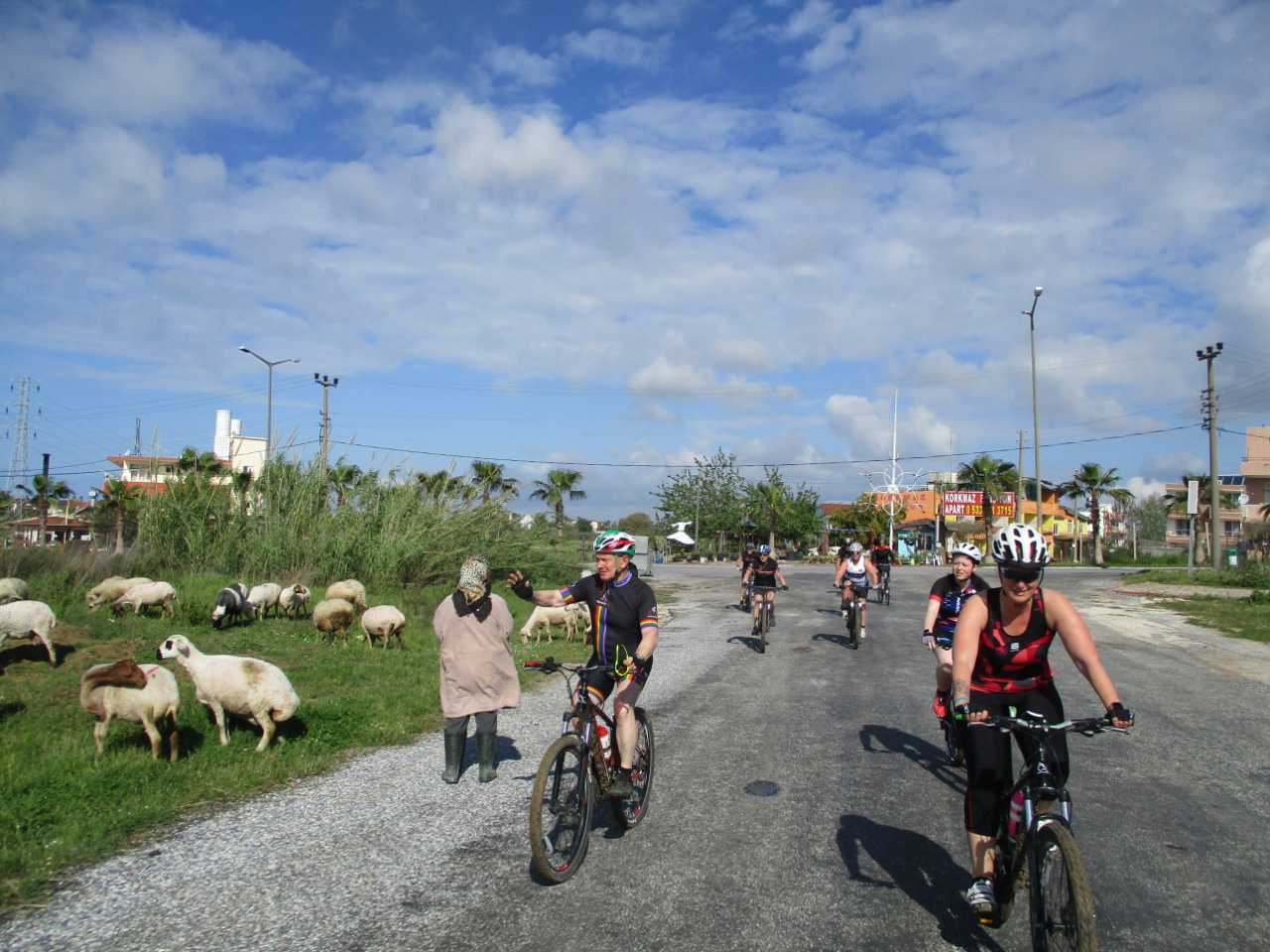 Bikefun Turkije groep schapen