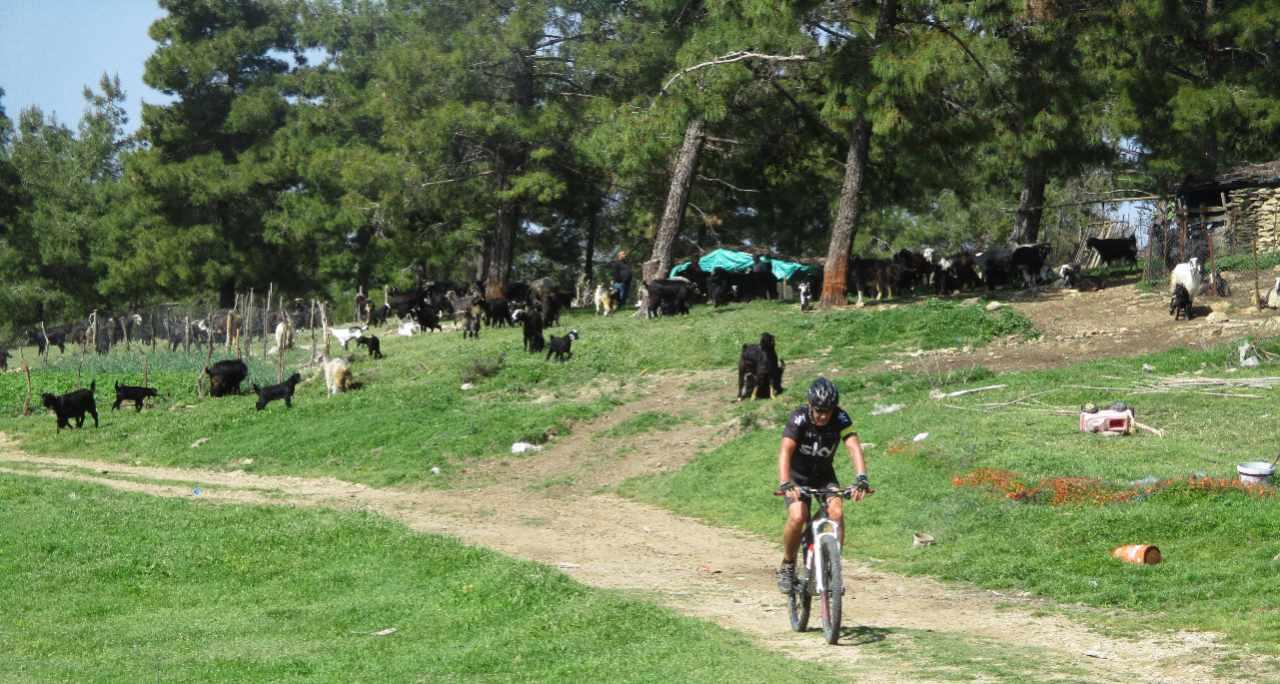 Bikefun Turkije wei met geiten