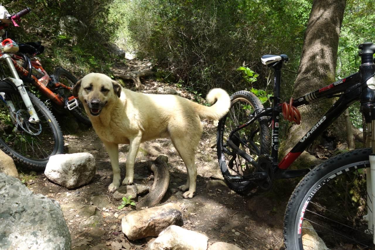 Gökdere fietsen met hond
