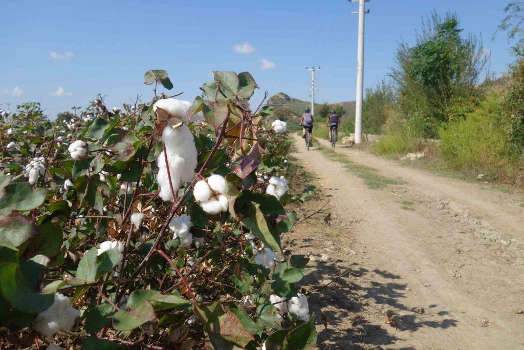 Fietsen in Turkije tussen de katoenvelden