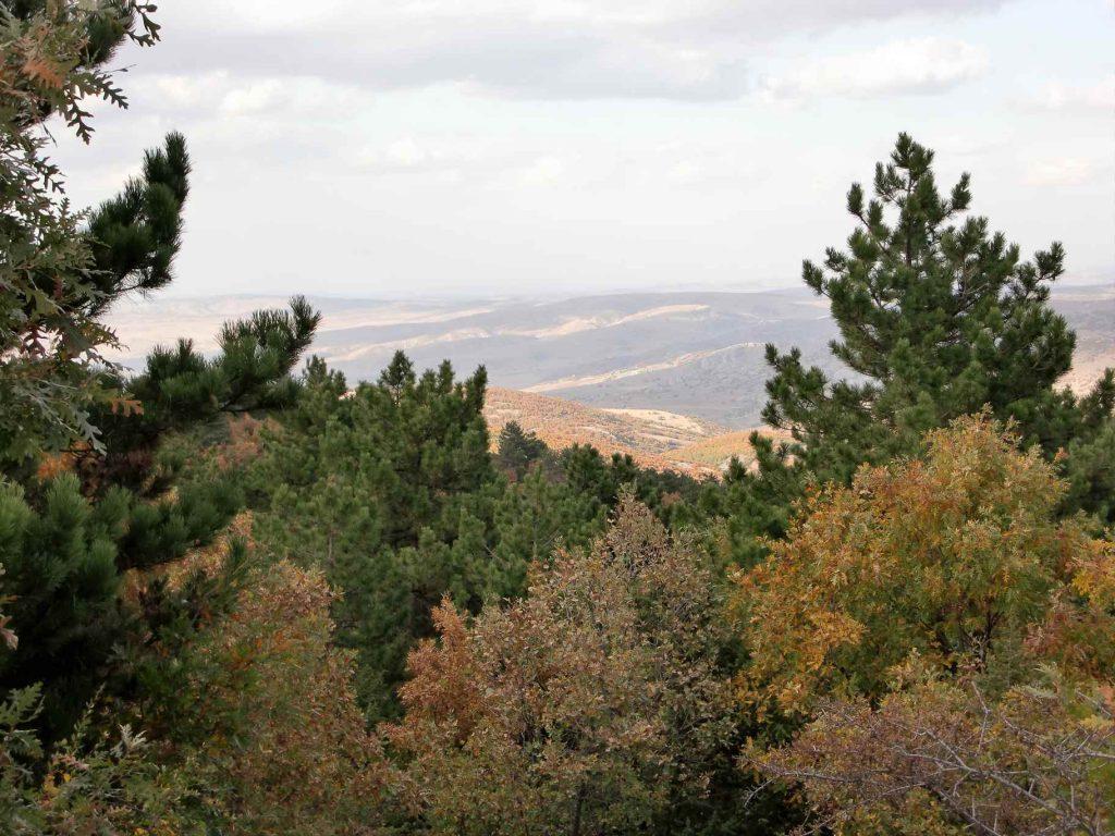 Naald- en loofbomen in de herfst in het Zwarte Zeegebied in Turkije