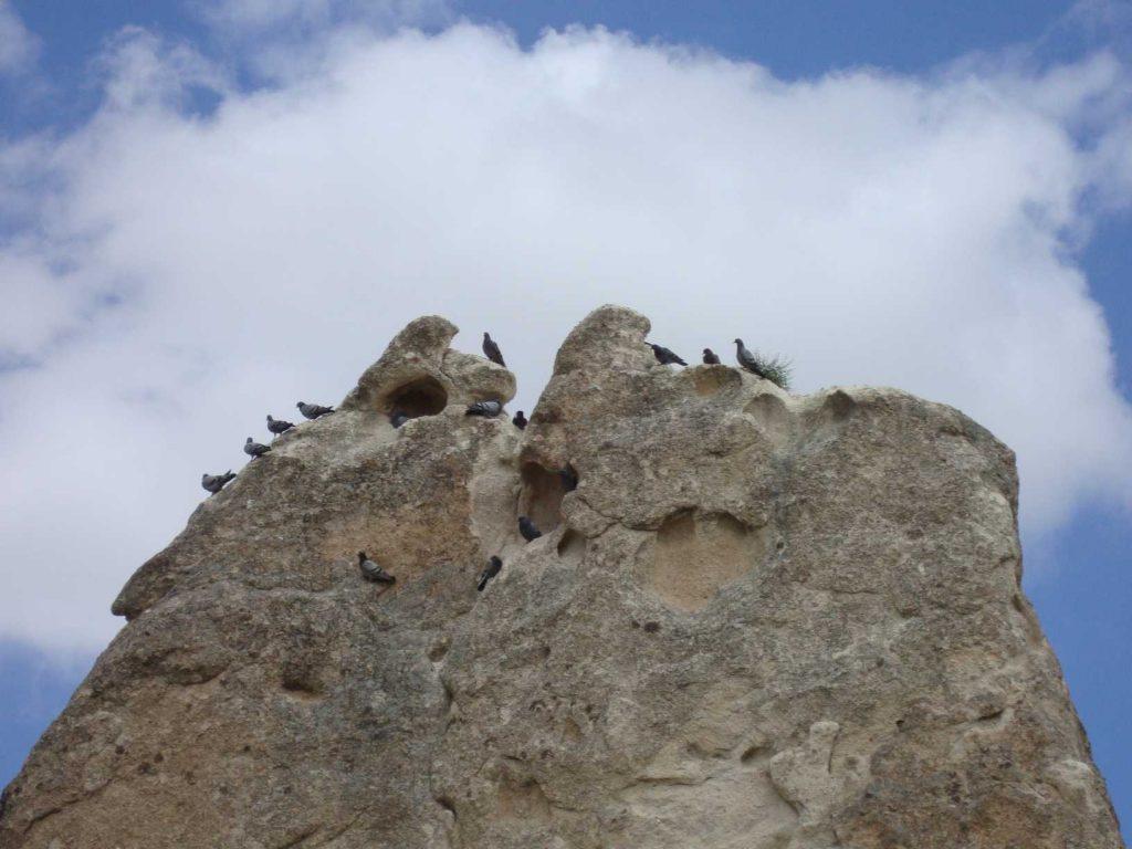 Cappadocie duiven
