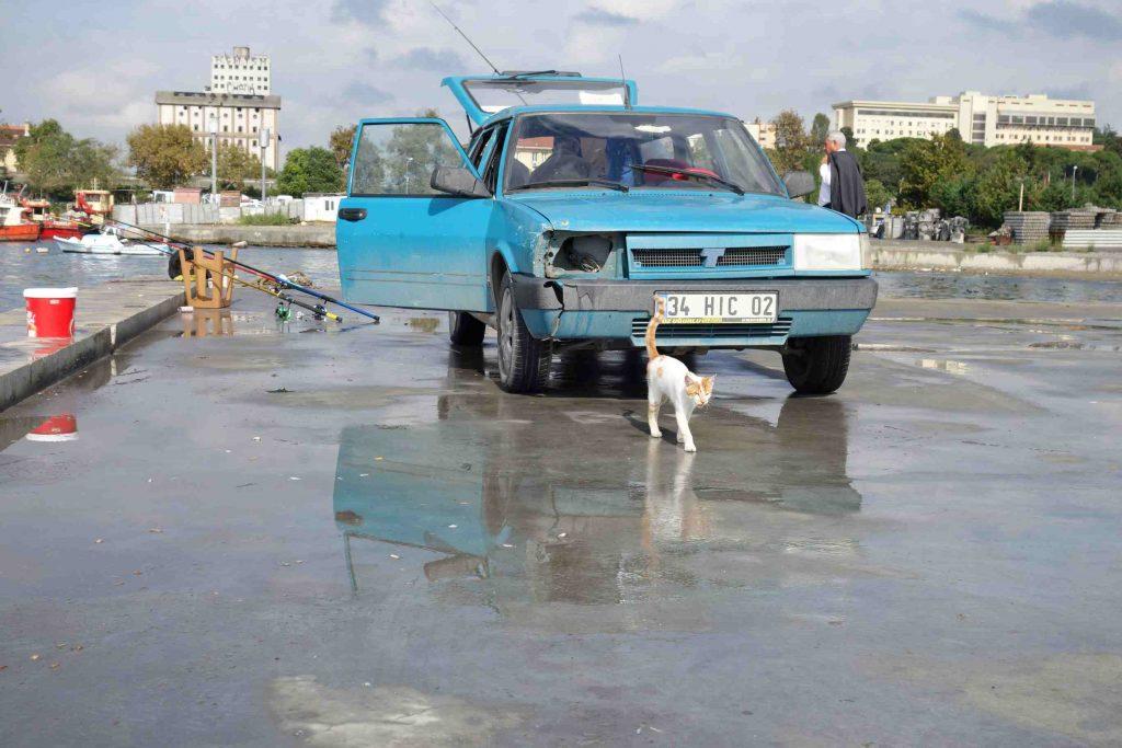 Zwerfkat op een pier in Istanbul waar gevist wordt met daarachter een blauwe, oude auto